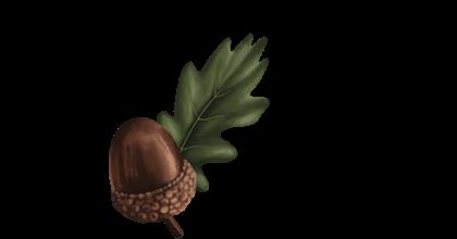 Seedlip Ingredient Oak